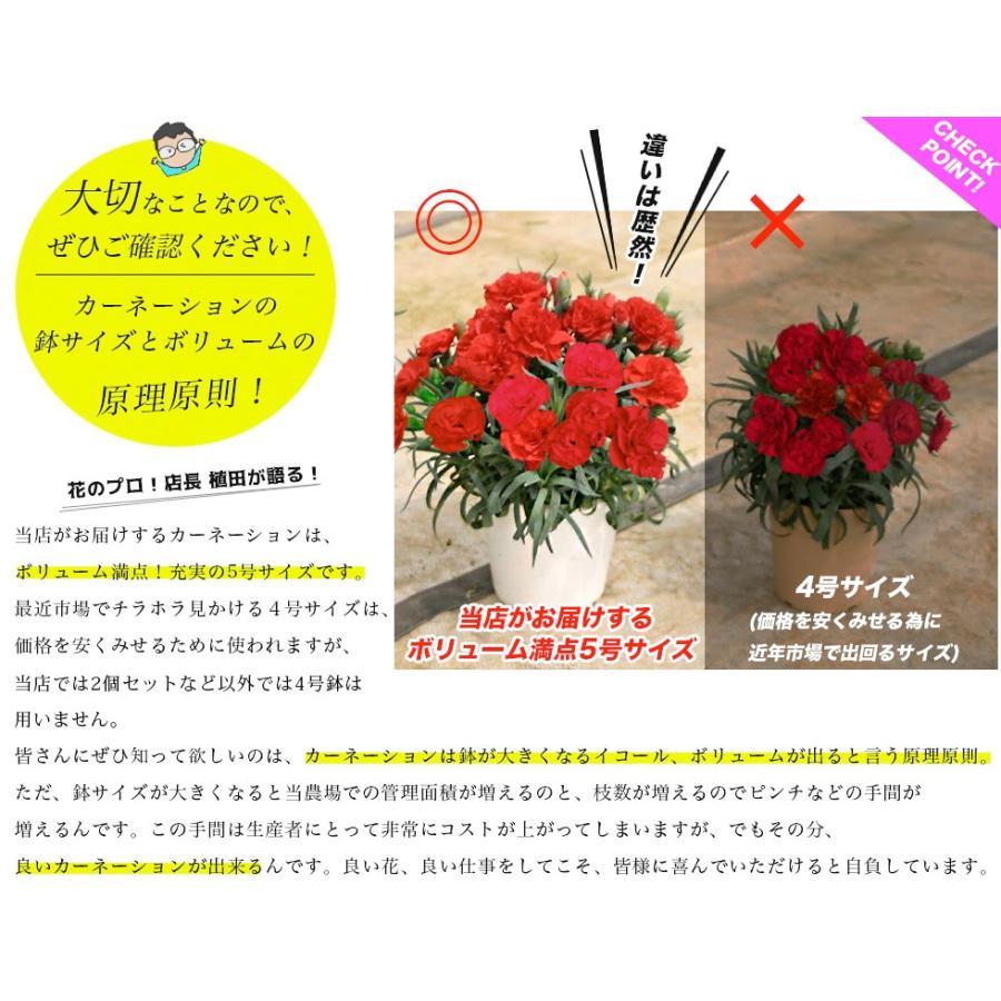 母の日 2021 花とスイーツセット sweets 鉢植え ギフト プレゼント カーネーション5号 gift 選べる花17種&お菓子4種|hanamankai|05
