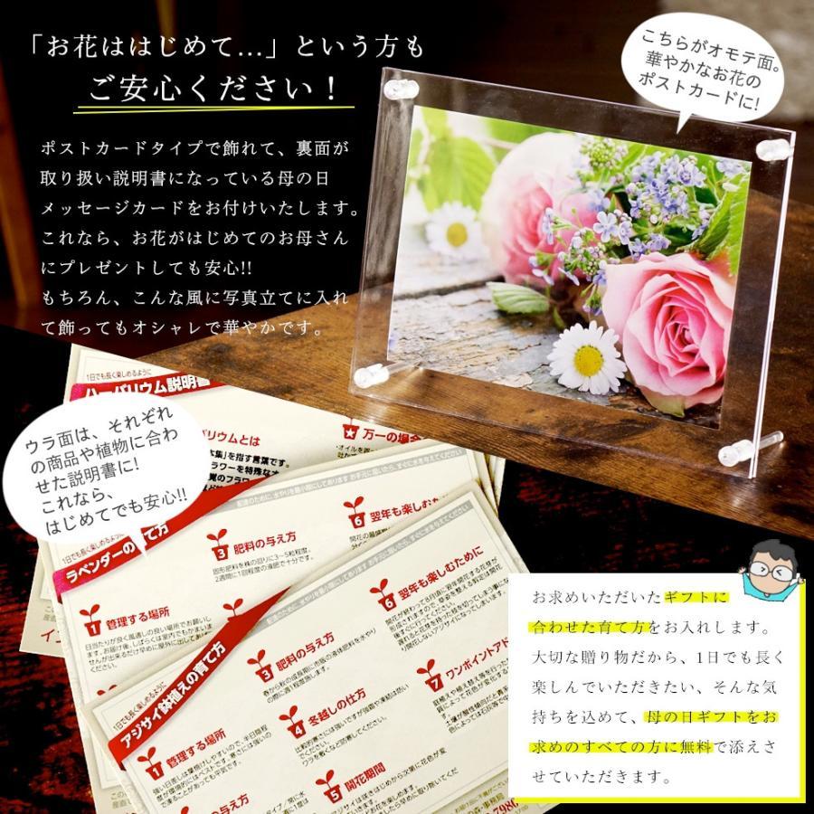 母の日 2021 花とスイーツセット sweets 鉢植え ギフト プレゼント カーネーション5号 gift 選べる花17種&お菓子4種|hanamankai|08