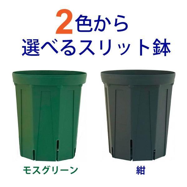 2色から選べる マート 5号スリット鉢 ロングタイプ 直径15cm 送料無料でお届けします CSM-150L