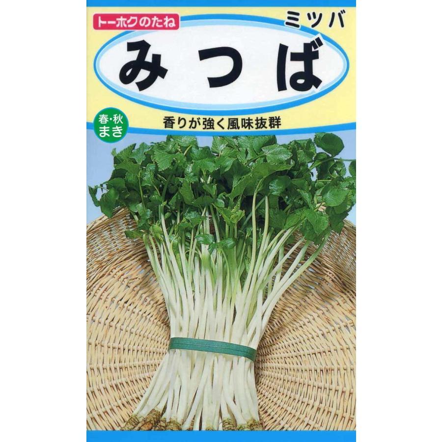 野菜の種 みつば 3袋まで送料73円 全店販売中 往復送料無料 三つ葉