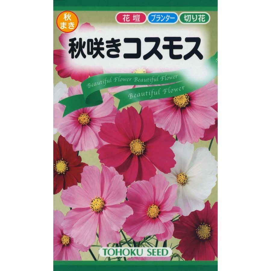 (訳ありセール 格安) 花の種 秋咲コスモス 本日限定 4袋まで送料73円