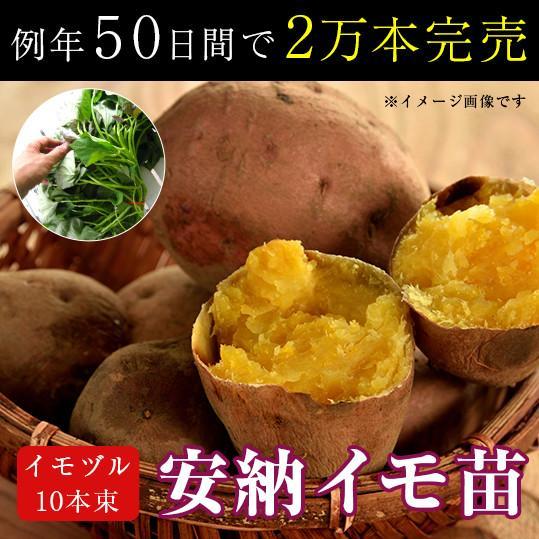 サツマイモ 苗 販売 「安納芋(イモヅル)10本  (※メール便不可)」トロ〜リ蜜あふれる話題の激うまイモ苗。(さつまいも・芋づる・安納イモ・案納芋|hanaururu
