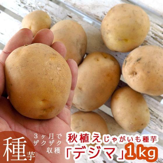 夏植え 秋植え じゃがいも 種イモ デジマ 手数料無料 1kg 長崎県産 検査合格済 種 馬鈴薯 家庭菜園 種いも苗 苗 ジャガイモ 激安格安割引情報満載 ばれいしょ