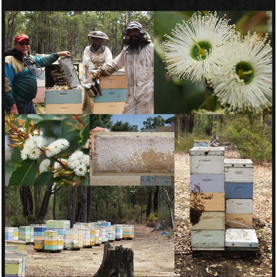 はちみつ ジャラハニー TA35+ 150g プレミアム アクティブ ジャラハニー 蜂蜜 ハチミツ ジャラハニーとマヌカハニー|hands|11