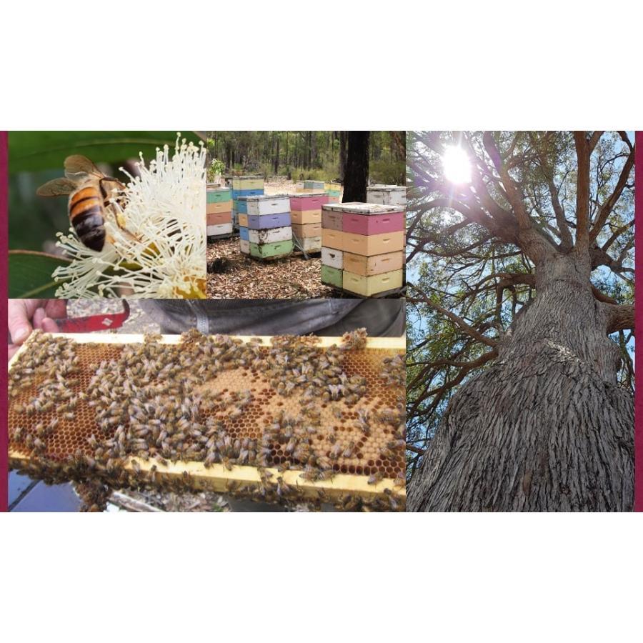 はちみつ マリーハニー TA35+ 500g プレミアム アクティブ マリーハニー オーストラリア産 蜂蜜 hands 11