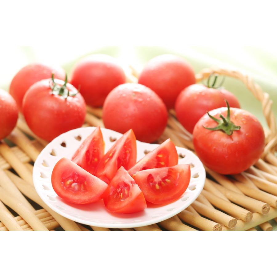 フルーツトマト 宅送 はるかエイト 驚きの価格が実現 約800g