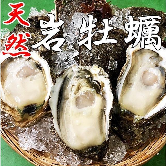 岩牡蠣 天然 好評受付中 日本海産 大10個 予約販売 2.7〜3.2k 生食用 カラ割り 殻付き 贈答 岩がき バーベキュー 岩ガキ ギフト お中元
