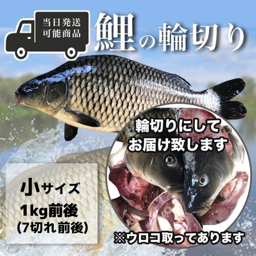 捧呈 鯉の輪切り 小サイズ 一匹 6-7切れ 活鯉時 1kg前後 食用鯉 煮付け用 販売 コイ 切り身 年中無休 鯉こく用