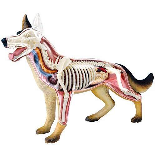 青島文化教材社 スカイネット 立体パズル 4D VISION 動物解剖 No.18 犬 解剖モデル|hayasho
