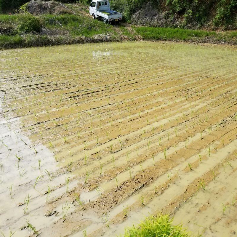 コシヒカリ 氷温熟成 玄米お試し5合 送料無料 令和2年産天空の城が浮かぶ雲海が育んだ備中産|hey-com-bicchu|02