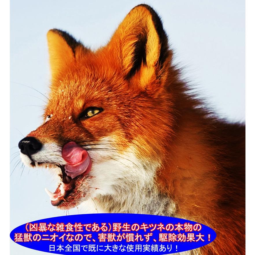 天然100%野生キツネ尿 イタチ(天井裏 屋根裏 屋外)貂テン野ネズミ 害獣 動物駆除 アニマルピーNo.2(天然フォックス尿)小ボトル|hm6|04