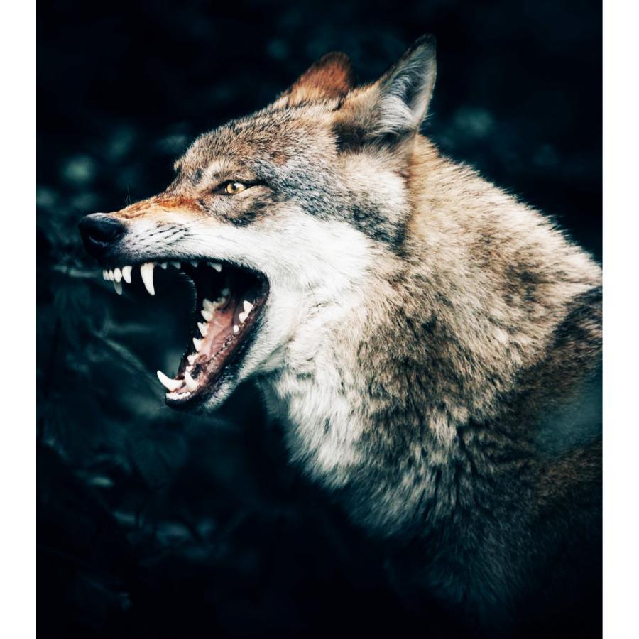 天然100%野生コヨーテ尿(オオカミの亜種) 野ネズミ鹿イタチ貂テン タヌキなど害獣 動物駆除 アニマルピーNo.4(ウルフ狼の亜種)小ボトル hm6 03