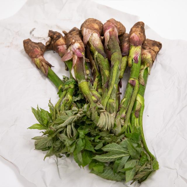 ウド 山菜