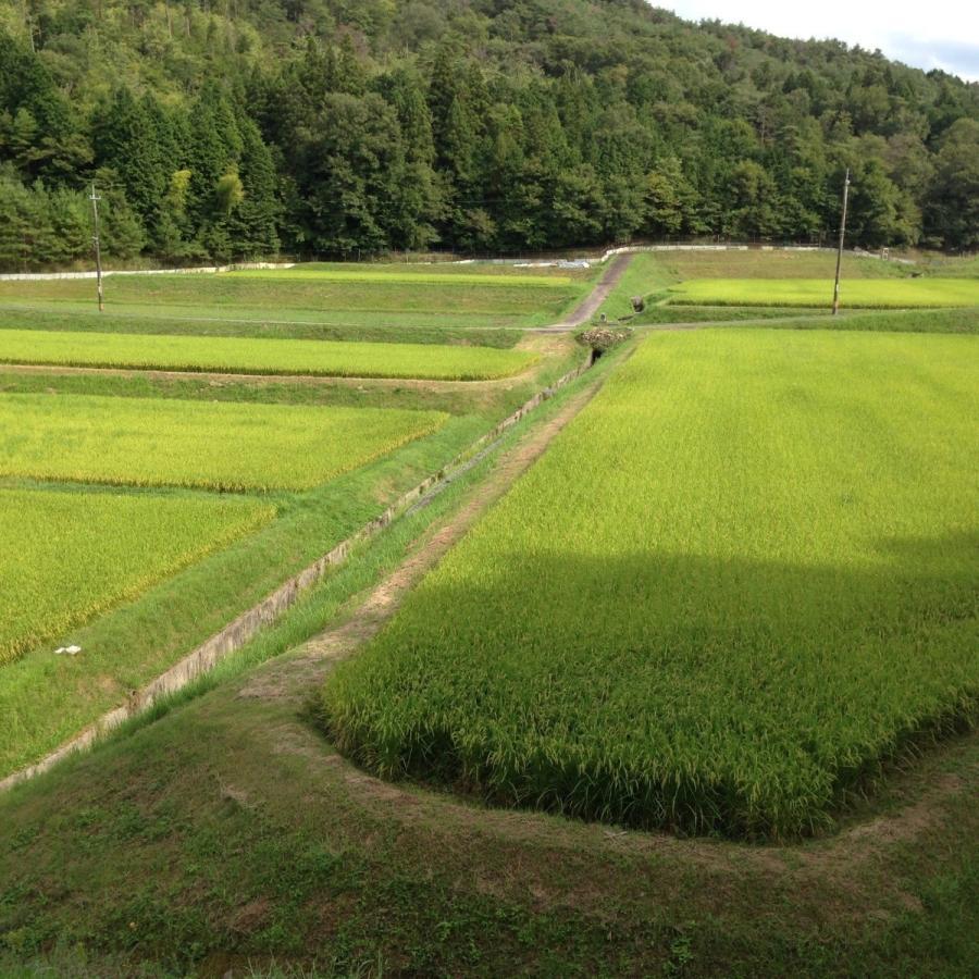 ☆彡令和2年産☆彡玄米5kg 広島県産コシヒカリ100% <送料無料>※一部地域を除く   |home407|04