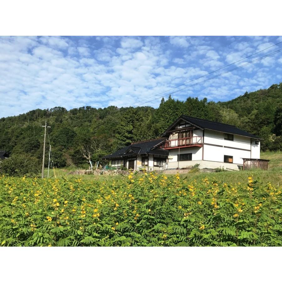 山田のはぶ草茶 80g|home407|03