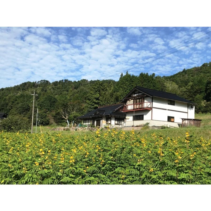 山田のはぶ草茶 ティーバッグタイプ2.5g×50包(125g) ☆彡送料無料 ※一部地域を除く|home407|03