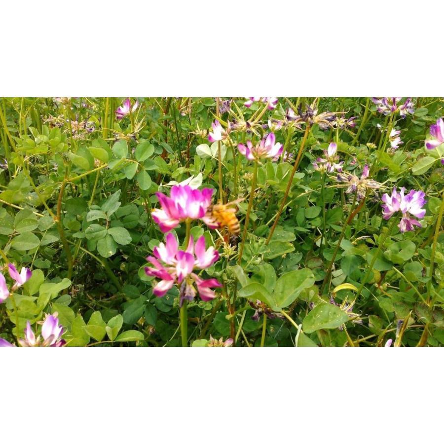 純粋 れんげ蜂蜜 180g home407 03