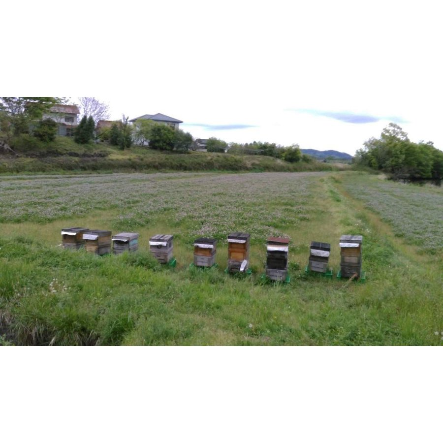 純粋 れんげ蜂蜜 180g home407 05