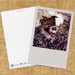 犬のポストカード ジャックラッセルテリア01 horiya-studio