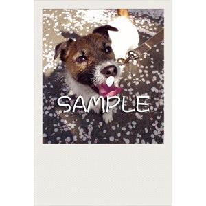 犬のポストカード ジャックラッセルテリア01 horiya-studio 02