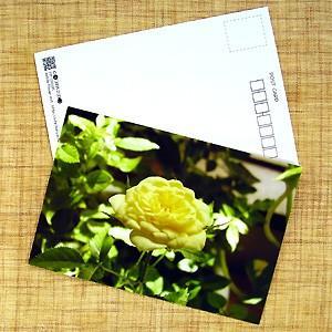 花のポストカード バラ(黄色)|horiya-studio