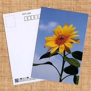 花のポストカード ヒマワリ horiya-studio