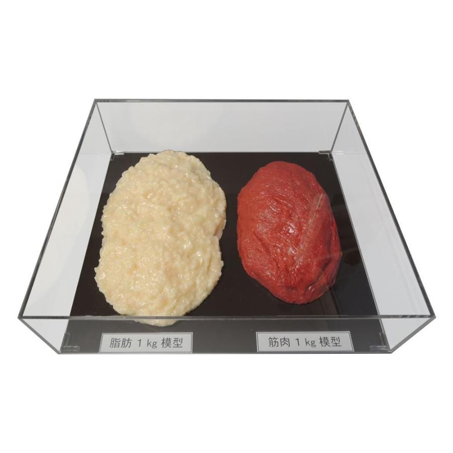 (送料無料)脂肪/筋肉対比セット(アクリルケース入)1kg IP-982