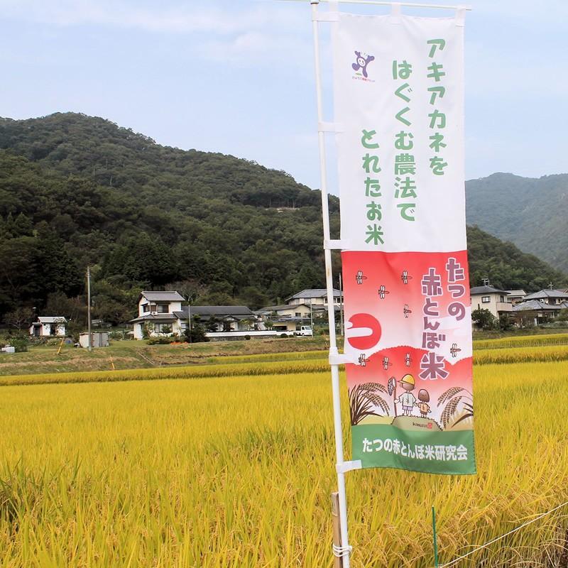 「たつの赤とんぼ米研究会」たつの赤とんぼ米 コシヒカリ(白米3 kg) hyogo-tokusanhin 04