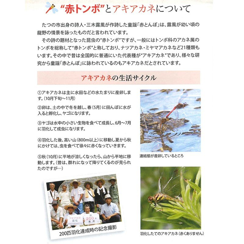 「たつの赤とんぼ米研究会」たつの赤とんぼ米 コシヒカリ(白米3 kg) hyogo-tokusanhin 07