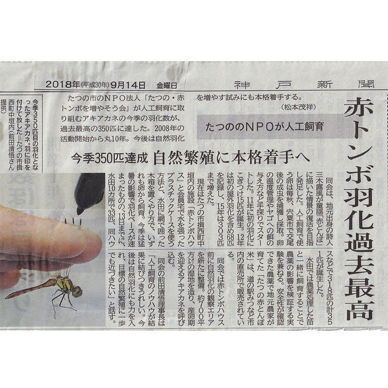 「たつの赤とんぼ米研究会」たつの赤とんぼ米 コシヒカリ(白米5 kg) hyogo-tokusanhin 08