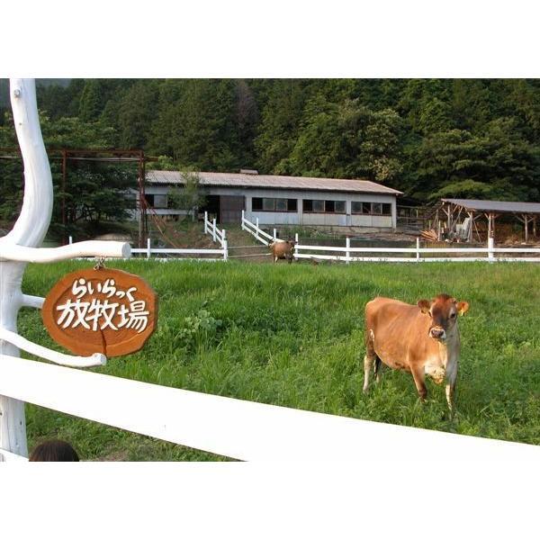 「あいす工房らいらっく」ジャージー牧場からの贈り物 ジェラート詰め合わせ8個セット(冷凍)|hyogo-tokusanhin|03