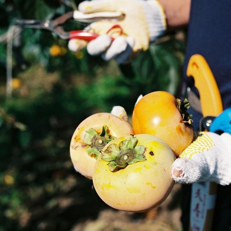 「ひょうごふるさと館」神戸咲く咲くHarmony 太秋柿チップス(640-5)|hyogo-tokusanhin|05