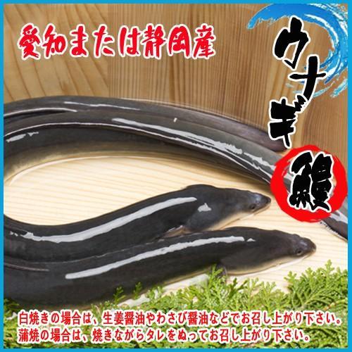 活 買収 高額売筋 うなぎ 国産 1尾 ウナギ 約160-170g 鰻 6Pサイズ