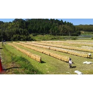 新米 お米 米10kg コシヒカリ 10kg (5kg×2袋)2021 令和3年産 米 こしひかり 鹿児島 白米 10キロ 精米 ポイント消化|ibusukiya|02