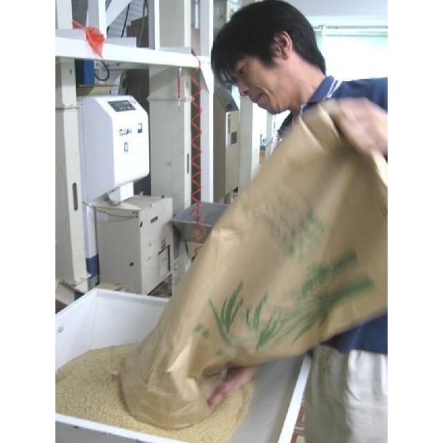 新米 お米 米10kg コシヒカリ 10kg (5kg×2袋)2021 令和3年産 米 こしひかり 鹿児島 白米 10キロ 精米 ポイント消化|ibusukiya|03