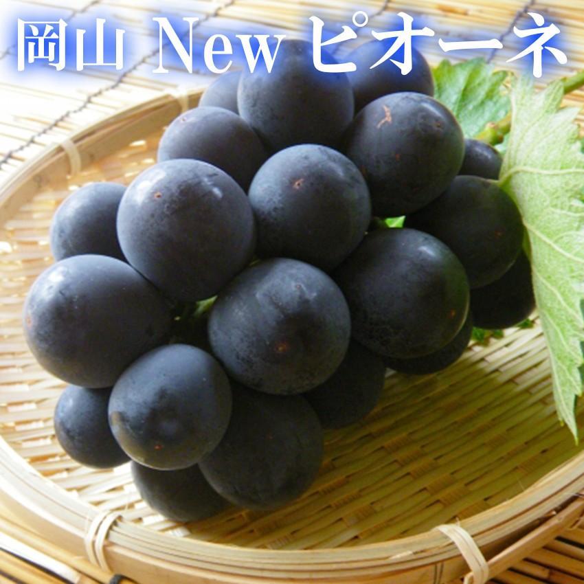 2021 ギフト 岡山県産 ピオーネ 赤秀品 2房400g×2房 贈答用 葡萄 ブドウ ぶどう 敬老の日 プレゼント 御礼 御祝 フルーツ|ichiba-koubou