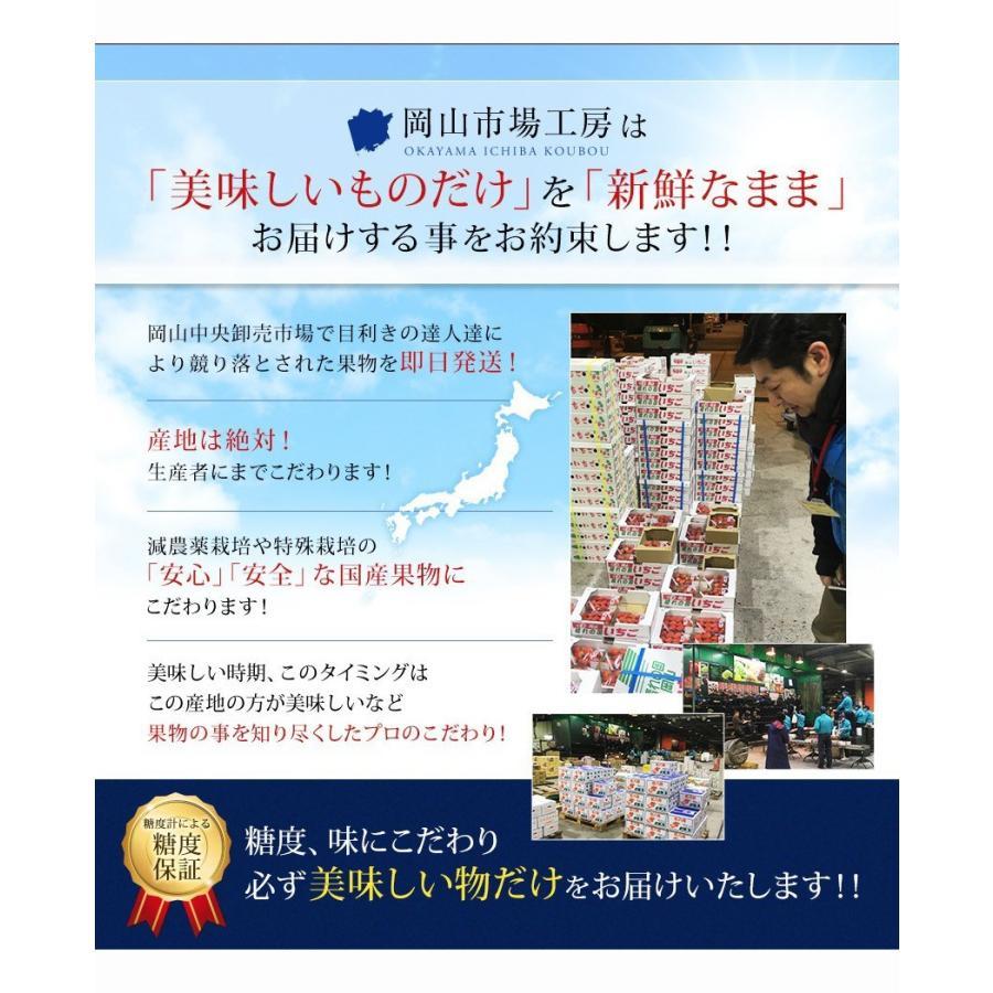 2021 ギフト 岡山県産 ニュー ピオーネ 600g 1房 贈答用 葡萄 ブドウ ギフト 敬老の日 プレゼント 御礼 御祝 フルーツ|ichiba-koubou|05