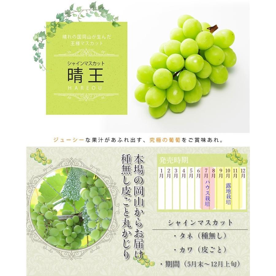 2021 ギフト 岡山県産 シャインマスカット 晴王 赤秀品 2房500g×2 贈答用 葡萄 ブドウ ぶどう 御礼 御祝 フルーツ|ichiba-koubou|02
