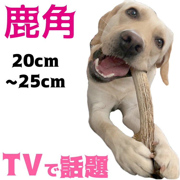 北海道産★鹿の角★ 20〜25cm大型犬〜中型犬犬のおもちゃ・おやつ送料無料 エゾシカ!ドッグガムデンタルケア口臭対策鹿角サステナブル・SDGsアスミライ|ichikawa929