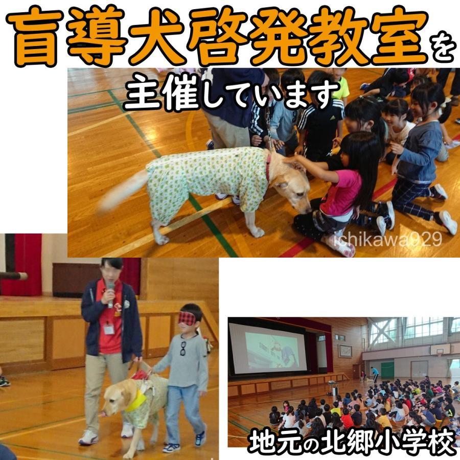 北海道産★鹿の角★ 20〜25cm大型犬〜中型犬犬のおもちゃ・おやつ送料無料 エゾシカ!ドッグガムデンタルケア口臭対策鹿角サステナブル・SDGsアスミライ|ichikawa929|13