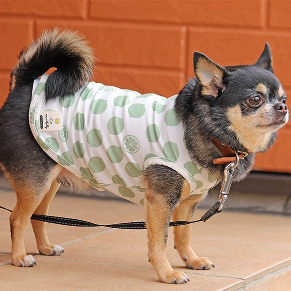 犬 服 セールiDog COOL Chill レモンタンク 接触冷感 メール便OK 夏 犬の洋服 犬服 ペット服 プードル チワワ ダックス|idog|17