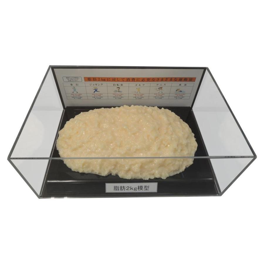 【同梱・代引き不可】 脂肪模型フィギュアケース入 2kg IP-979