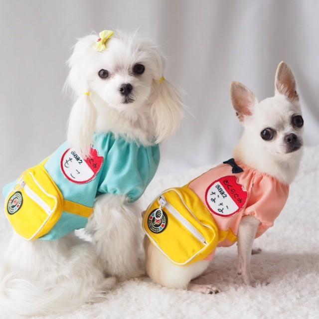 犬服 小型犬 中型犬 幼稚園 コスプレ コスチューム 春 夏 バッグ 付き  園児  ギフト プレゼント inuya 04