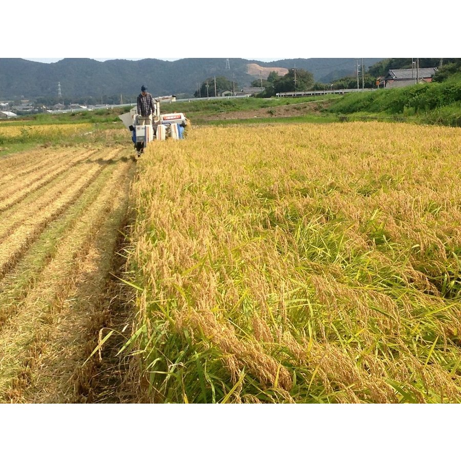 令和2年産コシヒカリ玄米 2kg 農薬・化学肥料不使用 精米無料(3分・5分・7分・白米)|iskwnouen|03