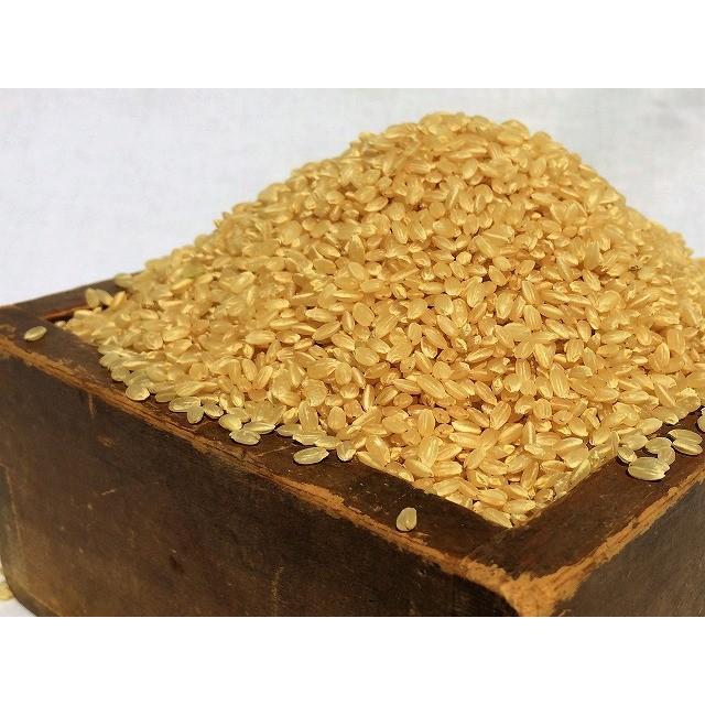 令和2年産コシヒカリ玄米 30kg 農薬・化学肥料不使用 精米無料(3分・5分・7分・白米)|iskwnouen