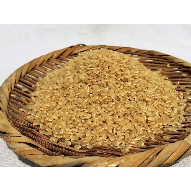 令和2年産 ミルキークイーン玄米 5kg 農薬・化学肥料不使用 精米無料(3分・5分・7分・白米)|iskwnouen