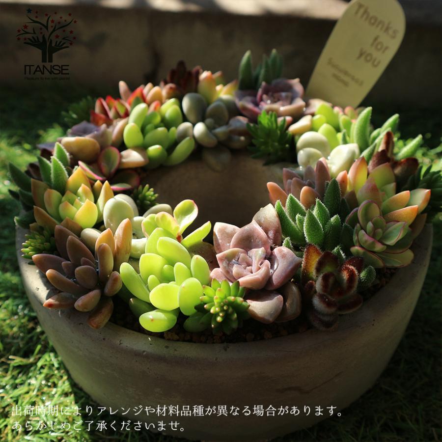 多肉植物 寄せ植え succulent wreath M(多肉リースM) 多肉植物  サイズイメージ:高さ約8cm×幅約16cm×奥行約16cm 1個売り  送料無料|itanse|10