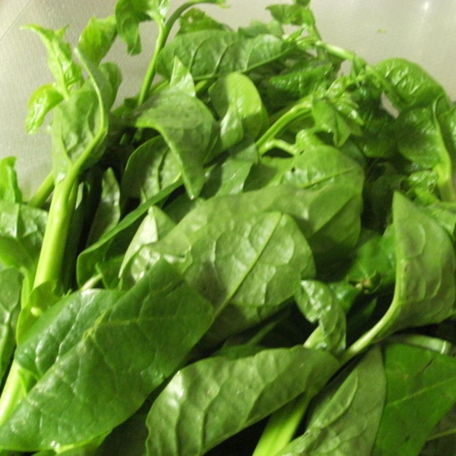 卓出 つるむらさき 緑黄色の夏野菜です 買い取り 福岡産