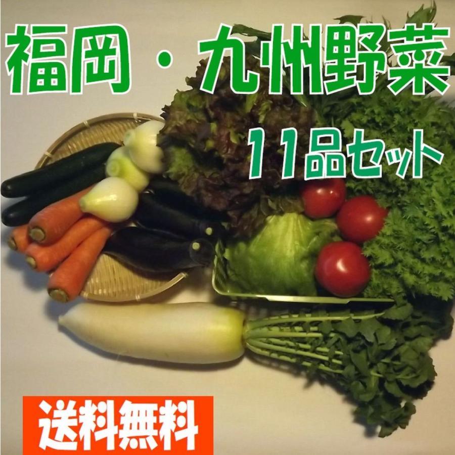 正規店 福岡 九州野菜11品セット 送料無料 ご希望の野菜をご要望欄にてお知らせください 出来る限り対応します 期間限定送料無料