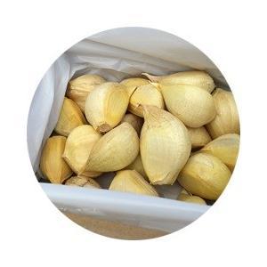 ジャンボにんにくの種(りん片)20個※栽培説明書付き|itomedetashi|03